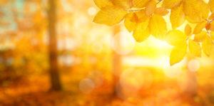 Préparez vos gouttières pour l'automne